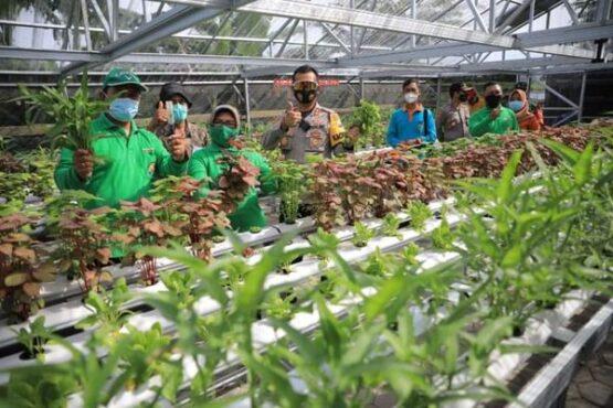 Wali Kota Madiun Maidi melihat green house hidroponik di Kelurahan Pangongangan, Jumat (19/2/2021). (Istimewa/Pemkot Madiun)