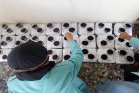 Gelar KKN di Sukoharjo, Mahasiswa UNS Ajak Warga Hidup Sehat dengan Hidroponik