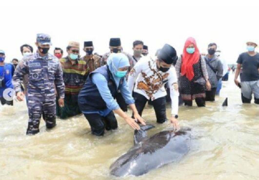 Gubernur Jatim Khofifah Indar Parawansa ikut evakuasi paus terdampar di Madura (Instaagram/@khofifah.ip).