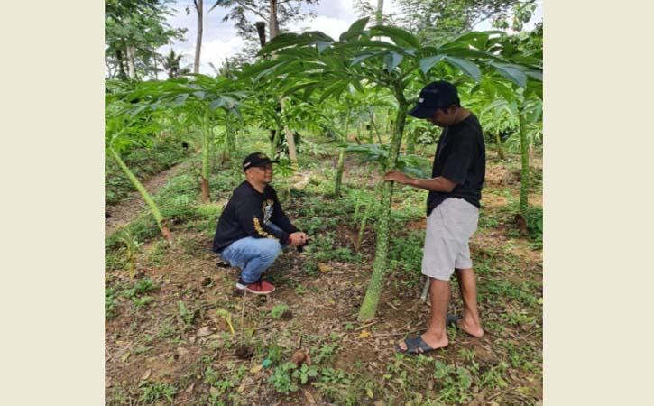 Menjanjikan! Porang Bisa Bikin Anak Muda Wonogiri Tertarik Bertani