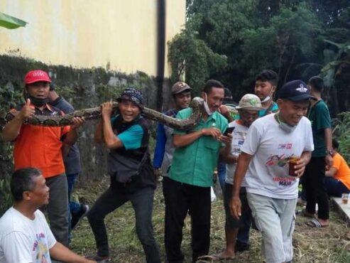 Tim dari Exalos Indonesia dibantu warga mengevakuasi ular piton yang ditemukan di anak sungai wilayah RW 025 Mojosongo, Jebres, Solo, Selasa (23/2/2021) siang. (Istimewa)