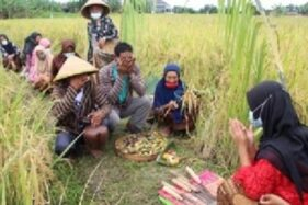 UNS Jadikan Demplot Rajalele Srinuk di Delanggu Wahana Merdeka Belajar