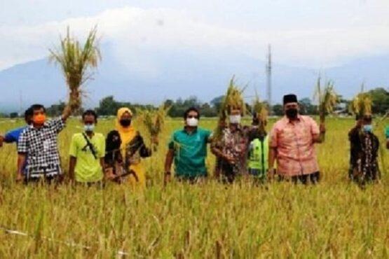 Sejumlah pejabat melakukan panen di lahan demplot penanaman varietas padi Rajalele Srinuk di Dukuh Ngebong, Desa/Kecamatan Delanggu, Minggu (28/2/2021). (Solopos.com-Taufiq Sidik Prakoso)