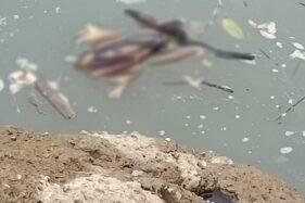 Mayat Bayi Misterius Mengapung di Sungai Sawur Sragen