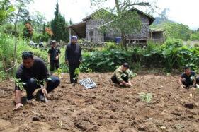 Tanam Ribuan Bibit Kopi, Petani Sidorejo Klaten Kembangkan Pertanian Kopi Organik