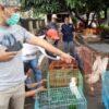 Ditangkap Di Indekos, Warga Laweyan Solo Jadi Tersangka Jual Beli Satwa Dilindungi