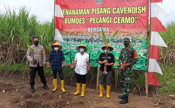 Anggota DPR, Rahmad Handoyo; Camat Sambi, Purnawan Raharjo dan Kepala Desa Cermo, Suranto, melakukan penanaman pohon pisang cavendish di Desa Cermo, Jumat (5/3/2021). (Solopos/Bayu Jatmiko Adi)