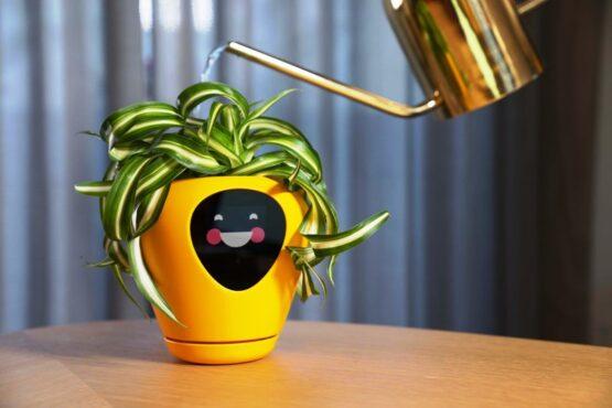 Pot Pintar Lua Memberi Tahu Kapan Tanaman Butuh Air dan Sinar Matahari