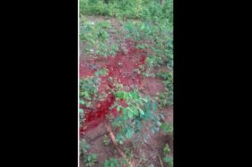 DLH Sukoharjo Sebut Air Merah Darah Di Pundungrejo Tawangsari Fenomena Langka