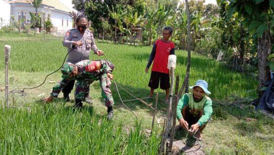 Bhabinkamtibmas bersama Babinsa Desa Karangudi, Ngrampal, Sragen, mencopoti jebakan tikus yang teraliri listrik di wilayah setempat, Rabu (24/3/2021). (Istimewa/Polres Sragen)