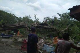 Angin Kencang, Pohon Asam Tumbang Timpa Puluhan Makam Di Joho Sukoharjo
