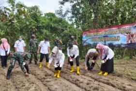 Ribuan Bibit Jagung Ditanam di Lahan Tadah Hujan Rejosari Sukoharjo