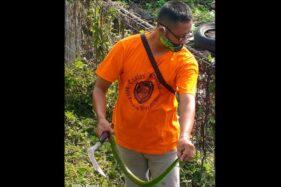 Sangat Berbisa! 11 Ekor Ular Hijau Ekor Merah Ditemukan Di Lapangan Kampung Sewu Solo