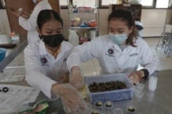 Dua mahasiswa UKSW Salatiga mengemas permen jeli herbal di kampusnya, beberapa waktu lalu. (Semarangpos.com-Humas UKSW)
