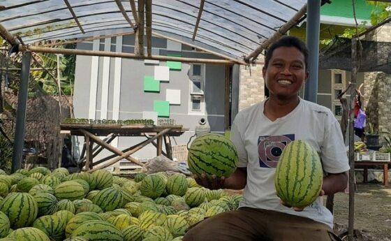 Seorang petani di Desa Singgahan, Kecamatan Kebonsari, Setyo Budi Utomo, menunjukkan hasil panen semangka dari sawahnya, Rabu (14/4/2021). (Abdul Jalil/Madiunpos.com)