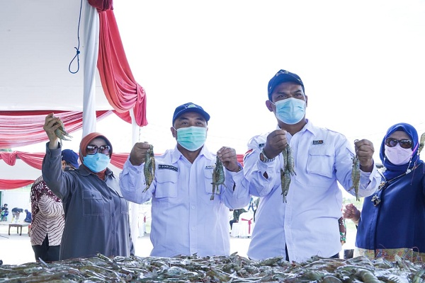 Panen Perdana Klaster Tambak KKP Hasilkan Udang Kualitas Ekspor