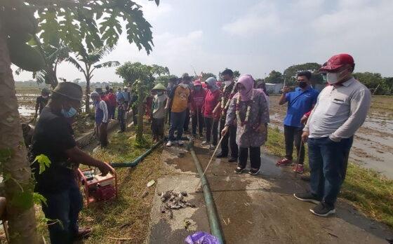 Bupati Etik Suryani dan Wabup Agus Santosa melaksanakan gropyokan tikus bersama petani di Desa Pranan, Kecamatan Polokarto pada Jumat (9/4/2021). (Solopos.com/Indah Septiyaning Wardani)