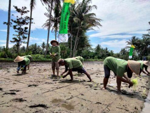 Petani di Sriwedari Muntilan Kabupaten Magelang mengawali masa tanam padi Jangir (beritamagelang.id)