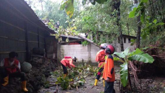 Sejumlah sukarelawan berusaha mengevakuasi pohon tumbang akibat embusan angin di Kalijambe, Sragen, Jumat (9/4/2021). (Istimewa/BPBD Sragen)
