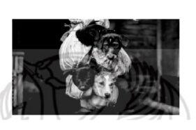 Nekat Jualan Kuliner Anjing di Sukoharjo, Siap-Siap Dikukut & Denda Rp50 Juta