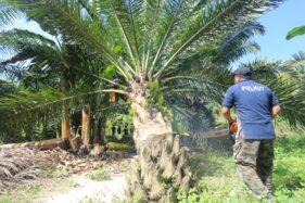 Hari Bumi: Deforestasi dan Panen Bencana di Indonesia