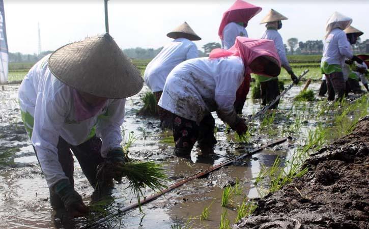 Di Sragen Masih Ada Kesenjangan Upah Pekerja Perempuan dengan Laki-Laki