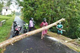 Angin Kencang Terjang Sleman, Banyak Pohon Tumbang dan Baliho Rusak