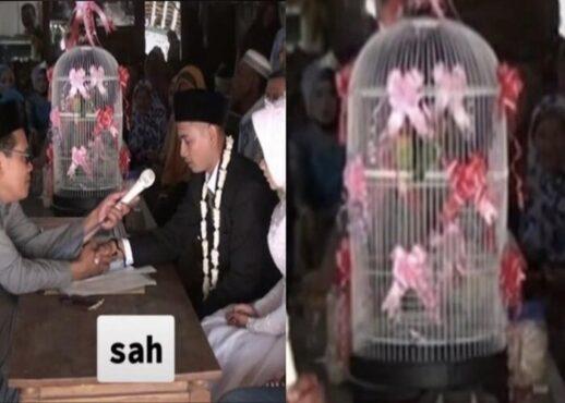 Pasangan ini menjadikan burung lovebird sebagai mahar pernikahan (Tiktok/@bangrony)