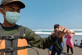 Waduh, Puluhan Pengunjung Pantai Parangtritis Tersengat Ubur-ubur