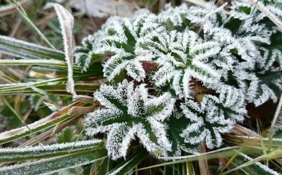 Fenomena Bunga Es Kembali Muncul di Gunung Lawu, Begini Penjelasan AGL