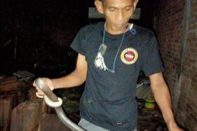Ngeri! 2 Ular Kobra Ditemukan di Rumah Warga Klaten, Sembunyi di Genting