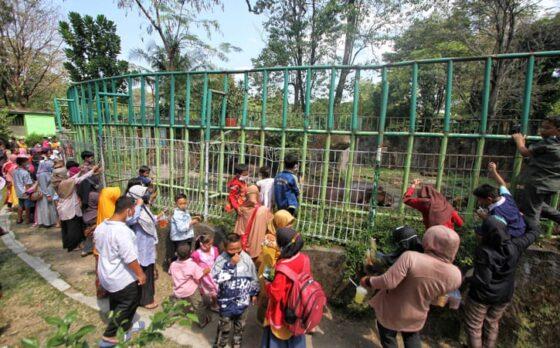 Pengunjung melihat kuda nil di Taman Satwa Taru Jurug (TSTJ), Solo, Minggu (16/5/2021). (Solopos-Nicolous Irawan)