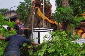 Pohon Tumbang di Boyolali Timpa Rumah dan Mobil, 1 Orang Meninggal Dunia
