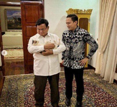 Kelucuan Kucing Viral Bobby, Mogok Makan karena Tak Disapa Prabowo