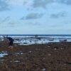 Kearifan Lokal: Air Laut Surut, Saatnya Warga Paranggupito Wonogiri Cari Lauk di Pantai