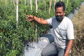Baik Hati! Petani di Klaten Ini Bagikan Sayuran Gratis untuk Warga Terdampak Covid-19 Selama Pandemi