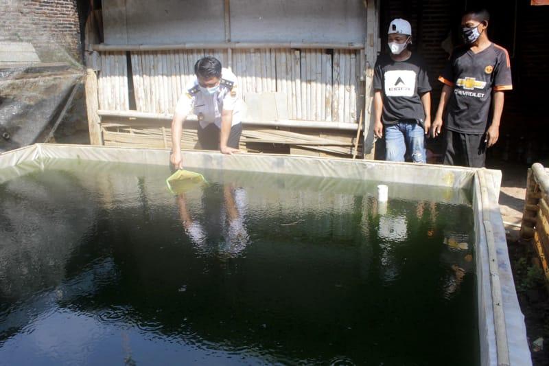 Kades Kadipiro Ibnu Indratmoko (kiri) menjaring bibit lele yang berumur dua pekan di kolam milik Parjiyanto di Dukuh Wadang RT 013, Desa Kadipiro, Sambirejo, Sragen, Rabu (30/6/2021). (Espos/Tri Rahayu)