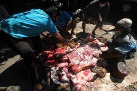 Distanpangan Kulonprogo Temukan Cacing Hati Pada 79 Ekor Hewan Kurban