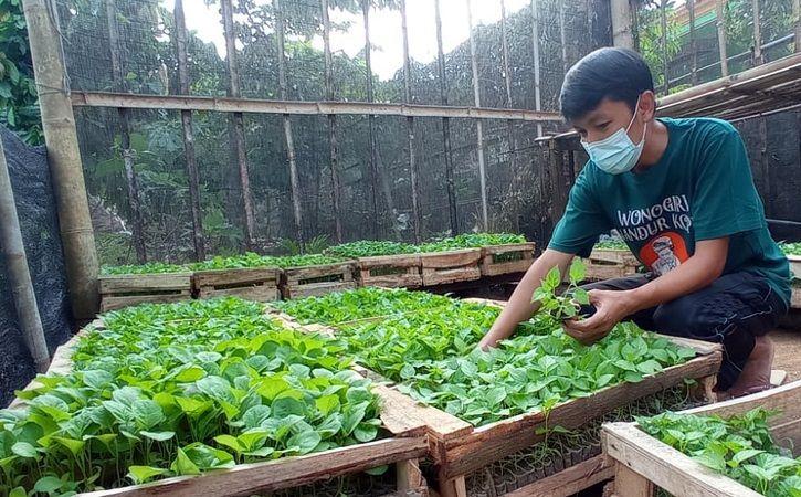 Tarmin sedang menata bibit sayuran di kebun Griya Amanah di Kelurahan/Kecamatan Jatipurno, Jumat (23/7/2021). Tarmin membagikan 5.000 bibit cabai dan terong untuk warga terdampak Covid-19. (Istimewa/Tarmin)