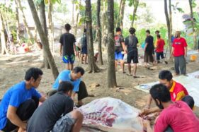 Wow, Sapi Kurban di Desa Pengkok Sragen Melimpah hingga 166 Ekor!