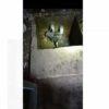 Weladalah, Sapi Kurban di Sukoharjo Kabur Saat Mau Disembelih hingga Kecemplung di Septic Tank