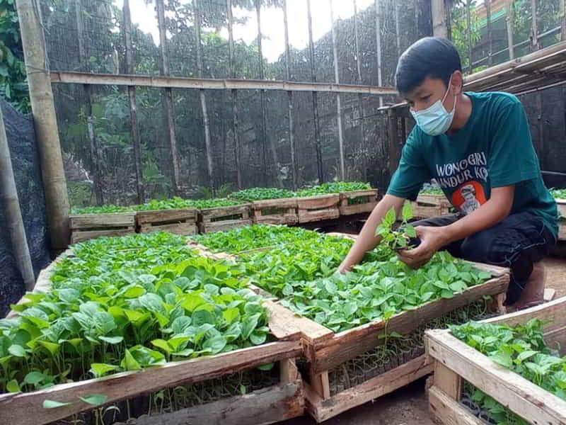 Tarmin sedang menata bibit sayuran yang akan dibagikan secara gratis, di kebun Griya Amanah di Kelurahan/Kecamatan Jatipurno, Jumat (23/7/2021) (foto kiri). Warung Makan Djos Gandhos membagikan makanan gratis untuk masyarakat hingga 25 Juli 2021. (Istimewa)