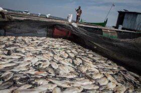 Ribuan Ikan Mati Milik Petani Keramba di Waduk Kedung Ombo Sragen