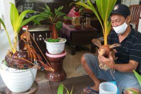 Mantul, Pensiunan ASN Klaten Bikin Bonsai Kelapa Ukir untuk Isi Waktu Luang