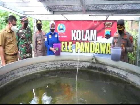 Kereen, Polsek Polokarto Budi Daya Lele dan Hidroponik di Lahan Kosong