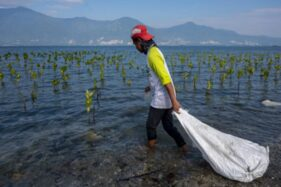 Kesadaran Isu Lingkungan Meningkat, Praktiknya Nanti Dulu