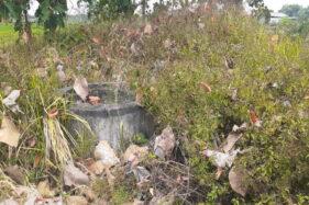 Asale Bekas Rumah Dinas Pengawas Perkebunan, Saksi Bisu Era KejayaanIndustri di Gatak Sukoharjo