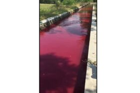 Aneh! Air Saluran Irigasi di Wonosari Klaten Mendadak Berwarna Merah
