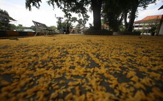 Indahnya Musim Gugur di UNS Solo, Bikin Kangen Deh