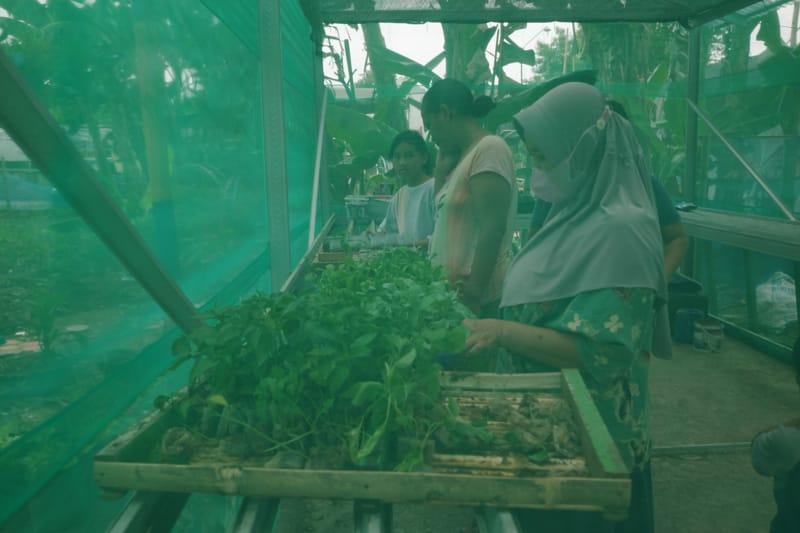Warga memilih sayuran yang sudah dipanen dari kebun warga di RW 011 Kelurahan Sangkrah, Kecamatan Pasar Kliwon, Solo. (Espos/Wahyu Prakoso)